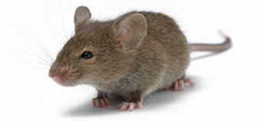 ipm mouse